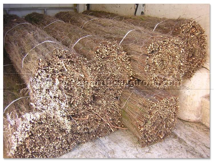 Venta brezo natural girona para vallas y ocultaciones - Precio brezo para vallas ...